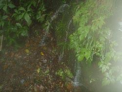 木ノ俣川の湧き水