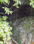 庚申川の湧き水