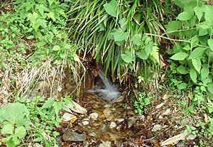 湯川の湧き水
