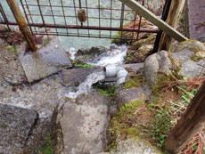 芹沢源造岩清水3